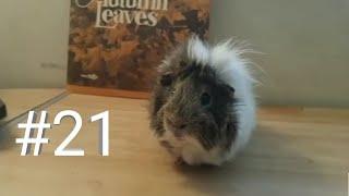 Забавные животные/Funny animals #21