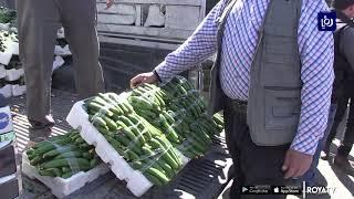 ارتفاع أسعار المنتجين الزراعيين 12% في5 أشهر بدعم من البندورة والباذنجان (9-7-2019)