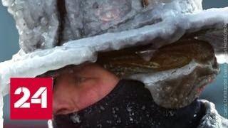 Игуанопад и человеческие жертвы: США накрыла климатическая бомба - Россия 24