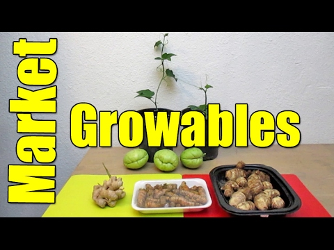 Produce Market Growables On The Cheap! Turmeric, Ginger, Taro & Chayote