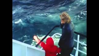 Trailer FAHRTWIND - AUFZEICHNUNGEN EINER REISENDEN von Bernadette Weigel (A 2013)