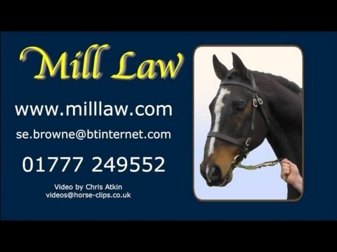 Mill Law's display in Stallion Show at Twemlows Hall, 2013