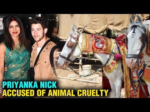 Priyanka Chopra & Nick Jonas ACCUSED Of Hurting Animals
