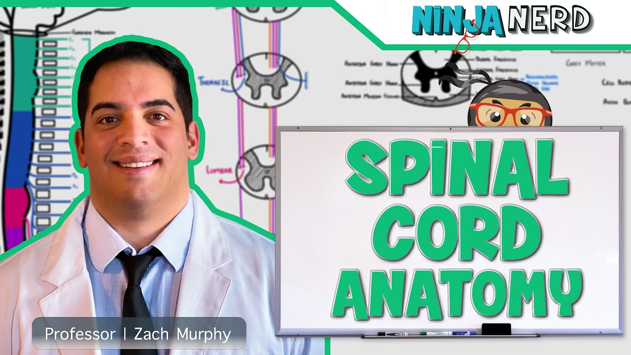 Neurology | Gross Anatomy of the Spinal Cord and Spinal Nerves