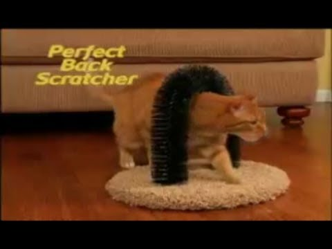 Purrfect Arch Commercial Purrfect Arch As Seen On Tv Cat
