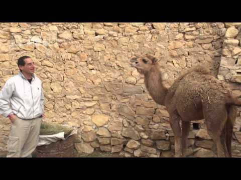 Mike Reiss Meets Dromedary Drama Critic