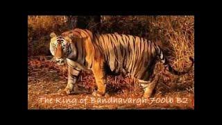 タイガーとライオンの戦い. どっちが本当の王者?ライオン vs 虎.