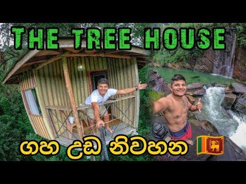 the tree house vlog  018 #treehouse #treehousehotel #srilankahotel