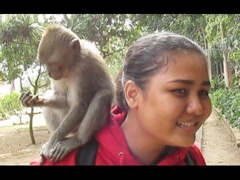 funny-monkeys-forest---wild-life-animal-planet---sangeh-kera-lucu---bali-island-[hd]