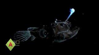 Ryby głębinowe - Top 6