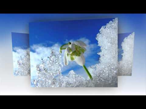 Весенние цветы.Слайд шоу из фото