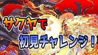 【パズドラ】ニーズヘッグ降臨壊滅級にサクヤで初見チャレンジ!