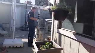 How To Stop Your Dog From Charging The Gate| Canine Tutors Dog Training