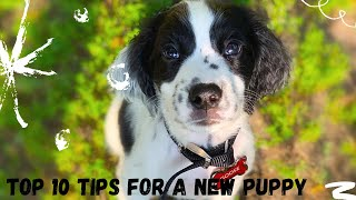 10 Things to Know When Bringing Your New Puppy Home