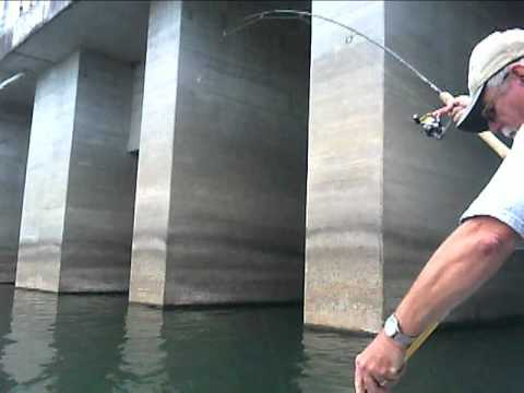 Pickwick lake fishing below wilson youtube for Pickwick lake fishing report