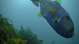 Reef Cam highlights - Your Window into Port Phillip Bay