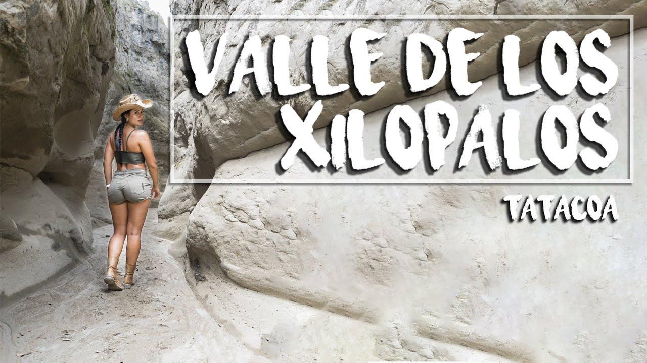 Valle de los XILOPALOS, Soy SEÑORITA de nuevo Valley of the XILOPALOS, I'm a LADY again 🌵 TATACOA