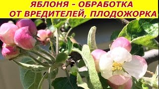 видео Обработка яблонь от вредителей весной