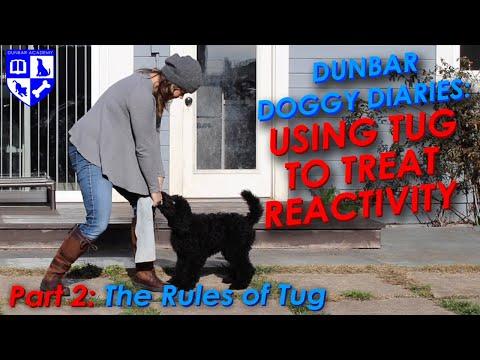 Dunbar Dog Diaries #15- Teach Tug to Resolve Dog Reactivity Pt 2: The rules of Tug