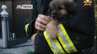 Curtarolo - esplosione per una fuga di gas ieri pomeriggio in casa a (poco fuori padova): salvi miracolo due 80enni e il loro cagnolino. -...