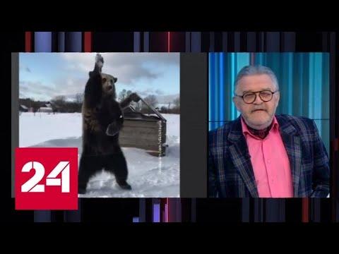 Медведи на льду: ничего необычного? - Россия 24