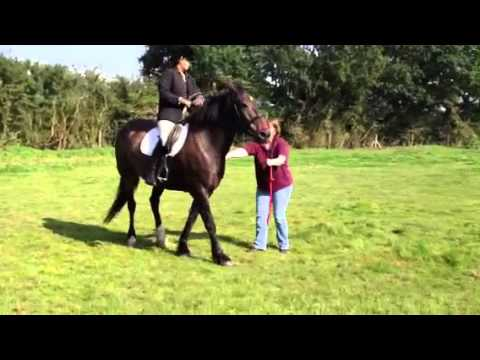 how to draw a rearing horse and rider