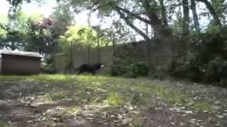 Eersteklaspension, Honden & katten, Nos Amis Fidèles SPRL, Plancenoit