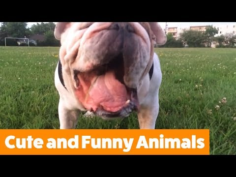 Funny Adorable Animals | Funny Pet Videos