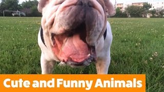Funny Adorable Animals | Funny Pet Videos thumbnail