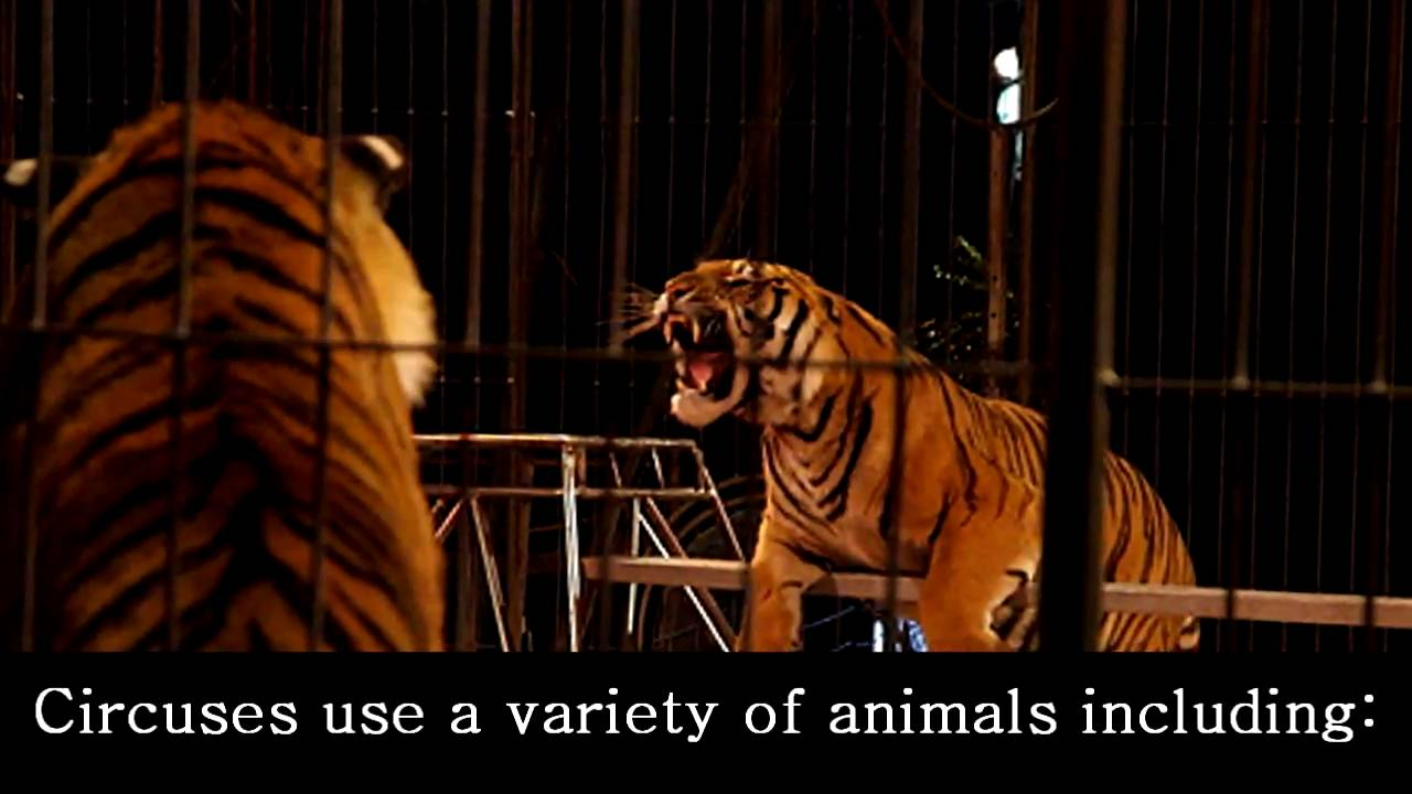 are circus animals mistreated