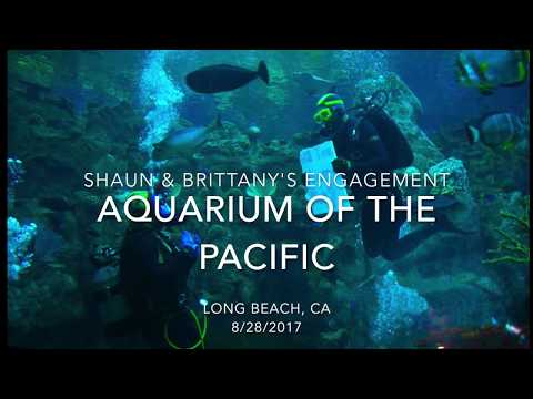 Shaun & Brittany's Aquarium of the Pacific Underwater Scuba Proposal
