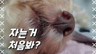 모망라토TV_코확대범 ㅣThor vlog_nub ban…