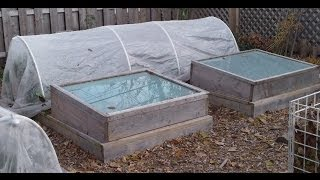 When To Harvest Greens From An Unheated Cold Frame, Polytunnel, Or Hoop House