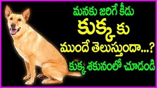 Unknown Facts About Dogs Will Shock Everyone | Dogs Can Predict Anything Before