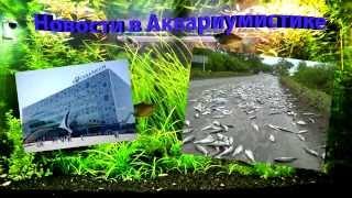 Новости в Аквариумистики /News in the Aquarium