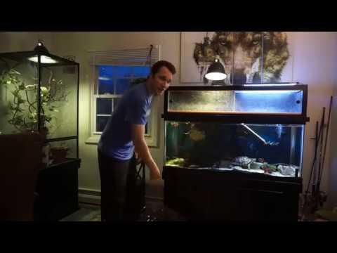 Apartment 75 Gallon Turtle Aquarium Water Change