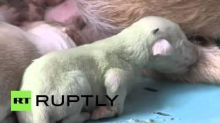 Video: Nacen 2 cachorros verdes en España