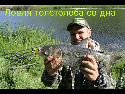 Ловля толстолоба со дна,Харьковская обл Золочевский район часть 2