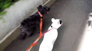 レオ君と小雪ちゃん、仲良く一緒にお散歩です。小雪ちゃんはいつもより...