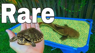 Saving TRAPPED BABY Turtle From HIDDEN Under ground Cave!!