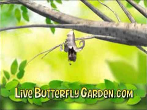 Live Butterfly Garden Commercial Youtube