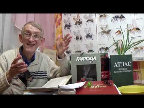 Что Такое Энтомология? Разделы Энтомологии. Сотрудничество (FULL STORY)