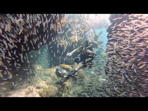 HD Roatan Scuba Diving 2016