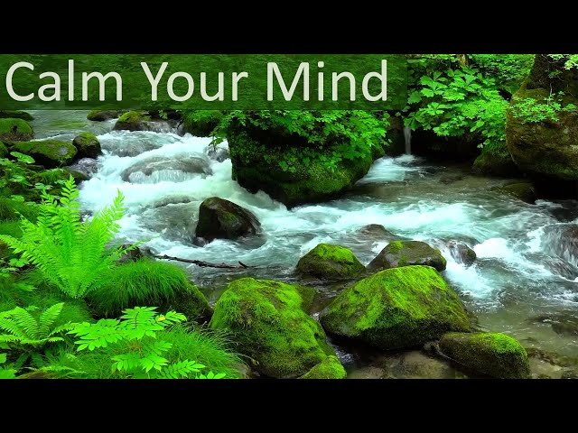 Take a Break 🍃 Relaxing Music and Sounds of Nature Forest to Relieve Anxiety and Stress - Wooden Fl