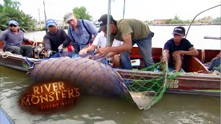 Jeremy Catches Pregnant Stingray Which Then Gives Birth! | STINGRAY | River Monsters