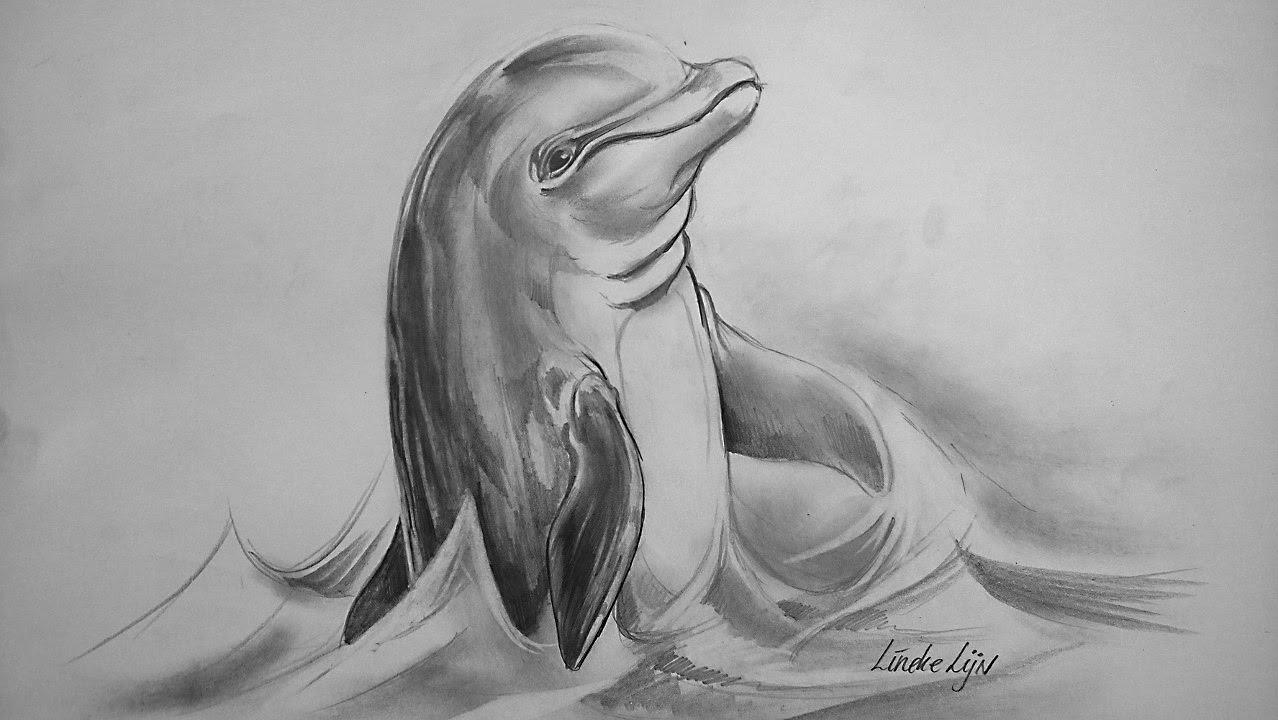 Dolfijn Tekenen Met Grafiet Potlood In Stappen Tekening