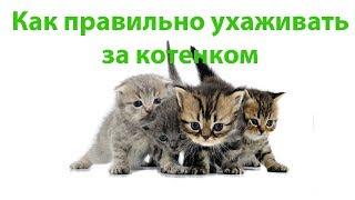 Содержание Котят & Как Правильно Ухаживать За Котятами. Ветклиника Био-Вет