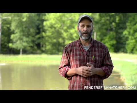 Pond Management - For better fish growth