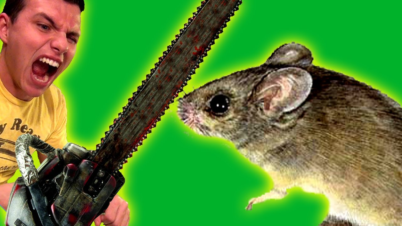 how to kill a mouse youtube. Black Bedroom Furniture Sets. Home Design Ideas