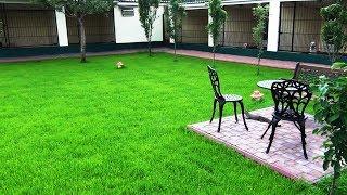 качественный травяной газон